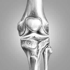 knee-rom