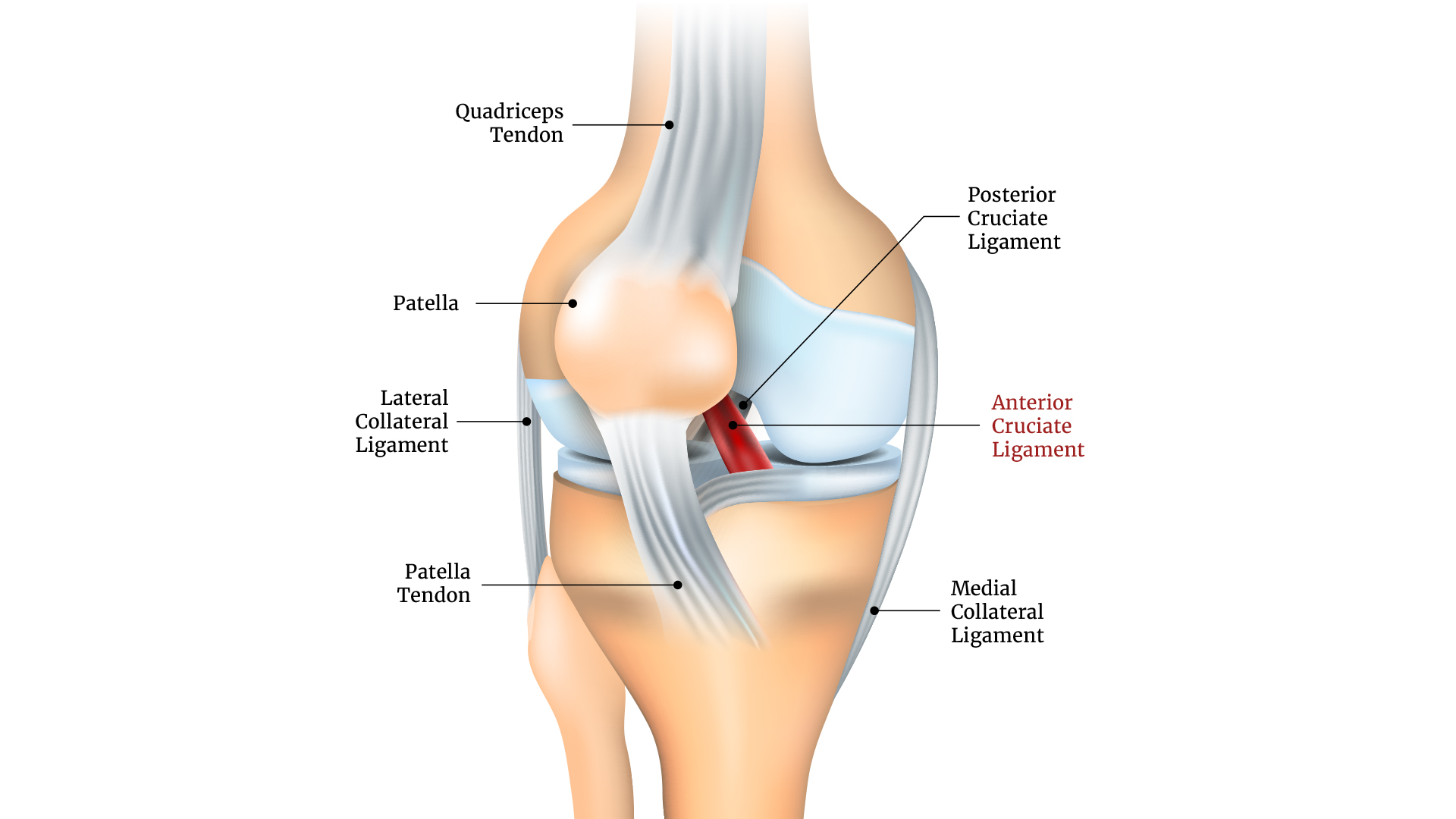 Levers Test: Knee Ligaments - Pilates Therapy