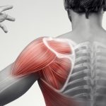 Bony Landmarks of the Shoulder - Pilates Therapy